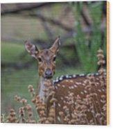 Deer V5 Wood Print