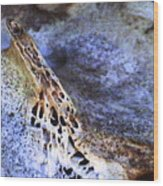 Deer Virtabrate Wood Print