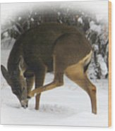 Deer With An Itch Wood Print