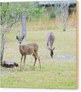 Deer18 Wood Print