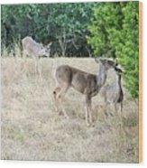 Deer24 Wood Print
