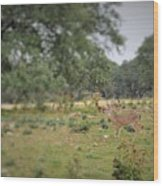 Deer48 Wood Print