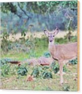 Deer50 Wood Print