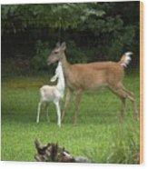 Deers Wood Print