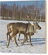 Deers Running On Snow Wood Print