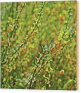 Deerweed In Rancho Santa Ana Botanic Gardens, Claremont-california Wood Print