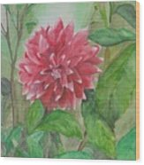 Dahlia Flower Grown In Apartment Garden Wood Print