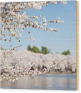 Delicate Blossoms Over The Tidal Basin Wood Print