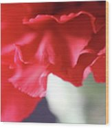 Delicate Carnation  Wood Print
