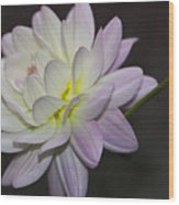 Delicate Dahlia Balance Wood Print