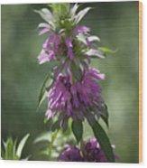 Delicate Desert Flower Wood Print
