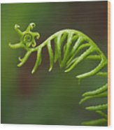 Delicate Fern Frond Spiral Wood Print