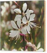 Delicate Gaura Flowers Wood Print