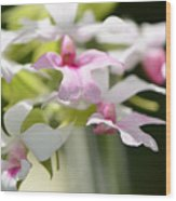 Delicate Orchids By Sharon Cummings Wood Print