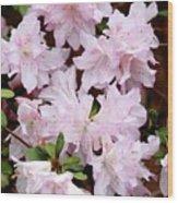 Delicate Pink Azaleas Wood Print by Carol Groenen