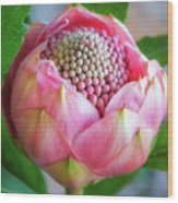 Delicate Pink Bud Waratah Flower Wood Print