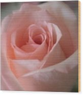 Delicate Pink Rose Wood Print