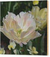 Delicate Pink Tulip 2 Wood Print
