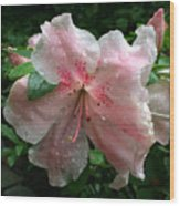 Delicate Pinks In Rain - Flower Photography Wood Print