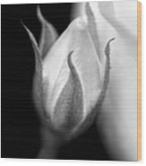 Delicate Rose Bud Black And White  Wood Print