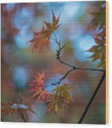 Delicate Signs Of Autumn Wood Print