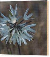 Delicate Silver Wildflower Wood Print