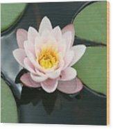 Delicate Waterlily Wood Print