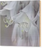 Delicate White Flowers Wood Print