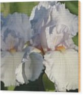 Delicate White Iris Wood Print