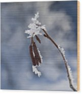 Delicate Winter Wood Print