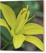 Delicate Yellow Oriental Lily Wood Print
