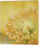 Delicate Yellow Poppy Wood Print