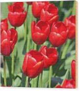 Delicious Tulips Wood Print