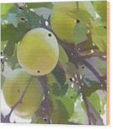 Delicious Yellow Apple In Summer Wood Print