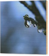 Delighted By Droplets Wood Print