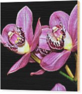 Delightful Orchid Wood Print
