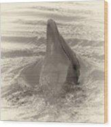 Delphin 1 Wood Print