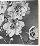 Delphinium Black And White Wood Print