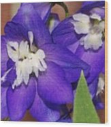 Delphinium Wood Print