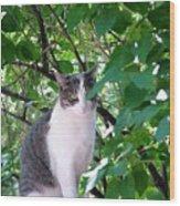 Demure Kitty Wood Print