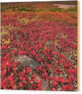 Denali National Park Fall Colors Wood Print by Kevin McNeal