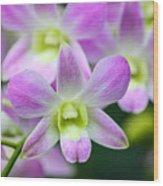 Dendrobium Orchids Wood Print