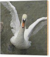 Denmark, Copenhagen Swan Flaps Her Wing Wood Print
