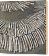Denmark, Romo, Seashells, Razor Clams Wood Print