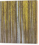 Dense Forest Of Poplar Trees In Boardman Oregon During Fall Wood Print