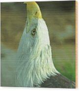 Denver Zoo Wood Print