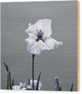 Desaturated Japanese Water Iris 2707 H_5 Wood Print