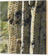 Desert Cactus 6 Wood Print