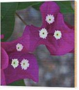Desert Flower 2 Wood Print