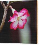 Desert Flower Wood Print